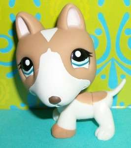 Littlest Pet Shop~#1095 TAN/WHITE BULL TERRIER PUPPY DOG~G156 LPS New