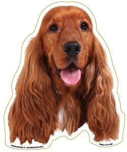 English Cocker Spaniel Dog Head Car Magnet