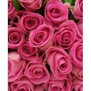 Send Fresh Cut Flowers   100 Long Stem Pink Roses  Grocery